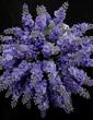 Hübsche/Lavendel Freigeformt Satin Brautjungfer Blumensträuße - (123031369)