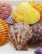 Beach Theme Shell Decorative Accessories (40 Pieces) (131036846)