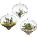Elegant Hanging Glass Vase