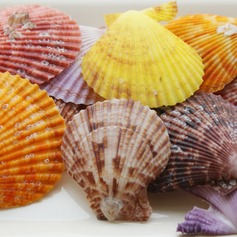 Thème de plage Coquille Accessoires décoratifs (40 pièces)
